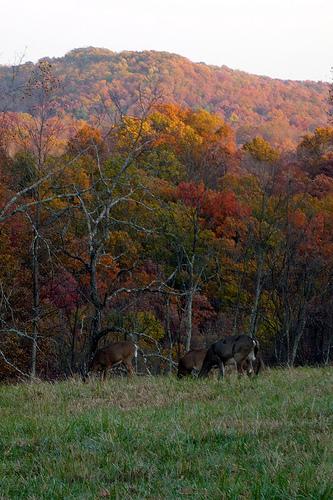 Deer Near the High Point
