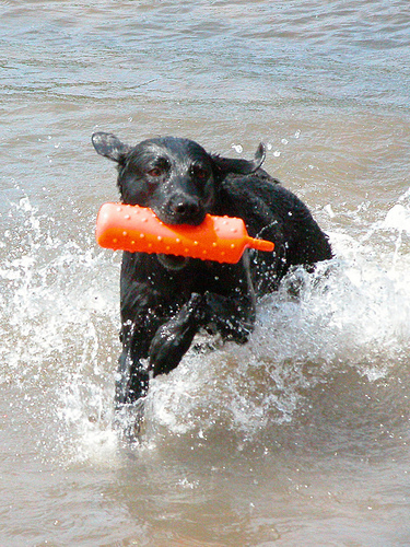 Elwyn splashes in the water
