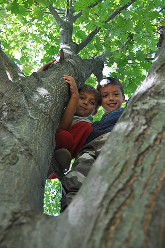 Neighbor kid and Carson in a tree