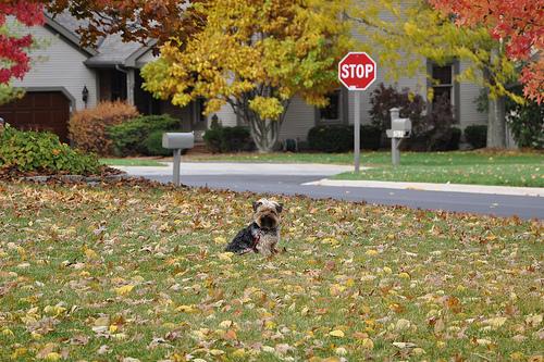 Neighborhood pooch