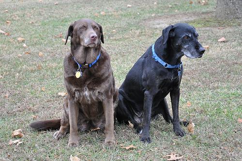 Holly and Molly