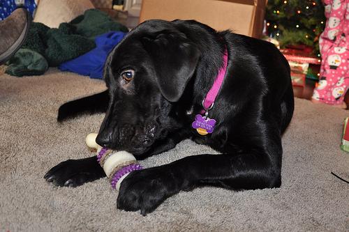 Fia enjoys her Christmas present