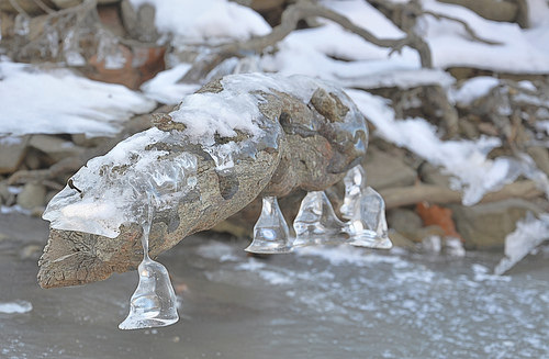 Odd Ice Formation on a Log (HDR)