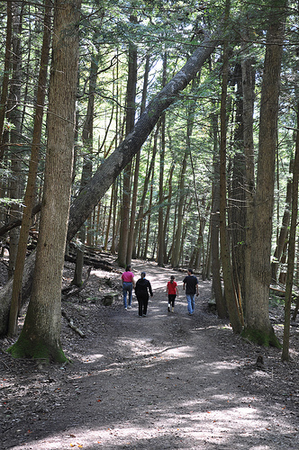 On the Trail at Hocking Hills State Park